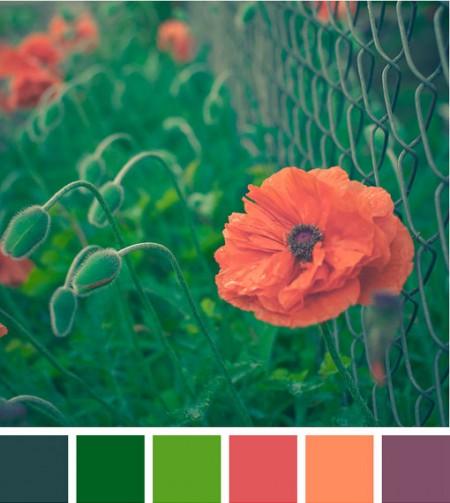 colorhappy_177