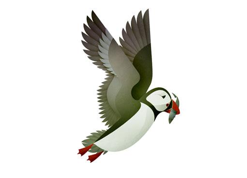AndrewLyons_Birds_03
