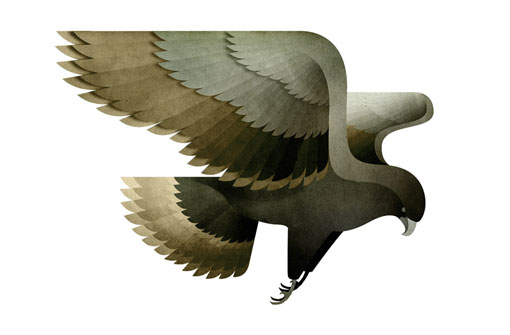 AndrewLyons_Birds_10